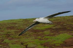 Grand-Albatros-34