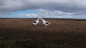 Grand Albatros-23